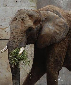 Elefant van