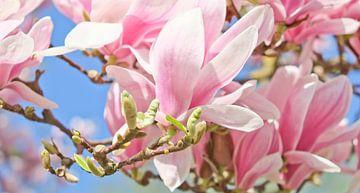 Endlich Frühling! von Andreas Kilian