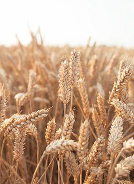 Céréales sur Jisca Kuijpers