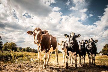 Koeien aan de waterkant in de zon van Cynthia Verbruggen