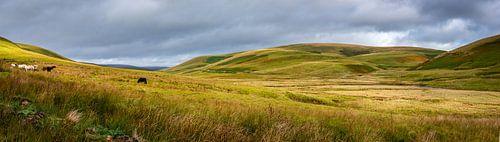 Grazende paarden in de vallei, Wales
