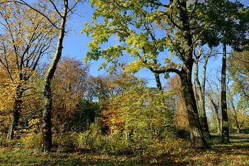 Kleurrijk herfstbos von