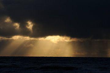 Meeuw vliegt door zonneharpen. van Muriel Polet