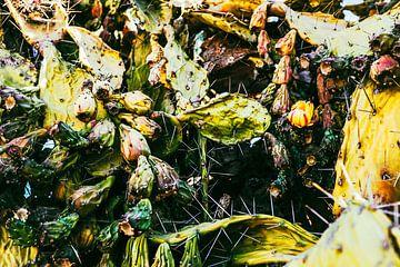 Cactussen van Heiko Westphalen