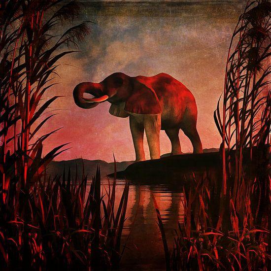 Dierenrijk – De drinkende olifant