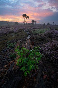 Zonsopkomst op de Loonse en Drunense Duinen met de paarse heide in bloei. van Jos Pannekoek