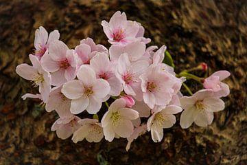 Blüte von Sharona de Wolf