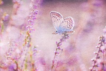 Vlinder in de heide van Daniela Beyer