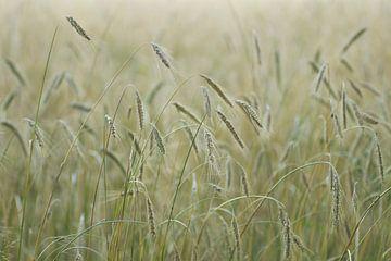 Grain sur Birgitte Bergman