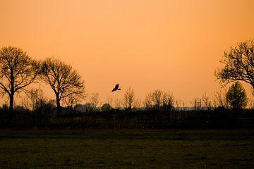 Roofvogel in zonsondergang van Ellen Metz