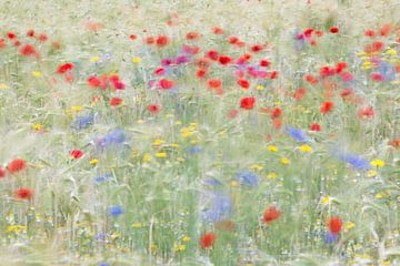 klaprozen en korenbloemen van Jeannette Kliebisch
