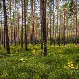 Herbstwald von Thomas Klinder
