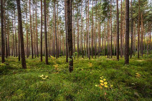 Herbstwald van