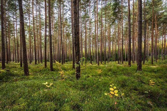 Herbstwald van Thomas Klinder