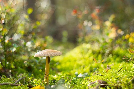 Macro fotografie paddestoel in herfstbos van Marloes van Pareren