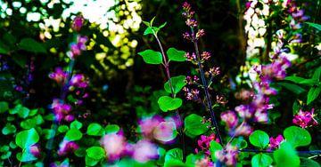 Roze paarse bloemen von Jane Changart