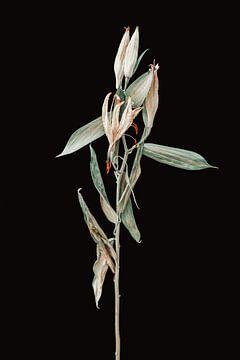 Getrocknete Blume von Robin Munnich