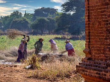 De landarbeiders van Bagan van Rik Pijnenburg