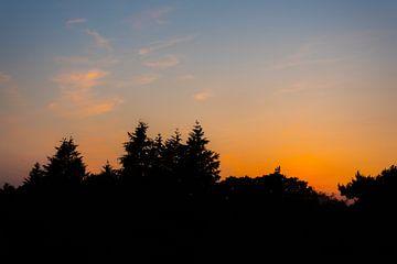 bomen in de schaduw, zonsondergang. van Robin van Maanen