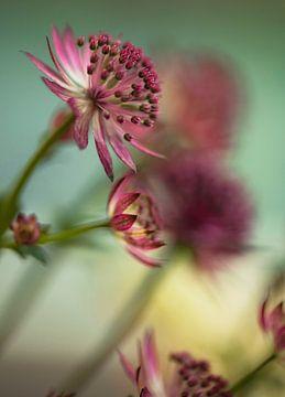 Blume # 11 von tim eshuis