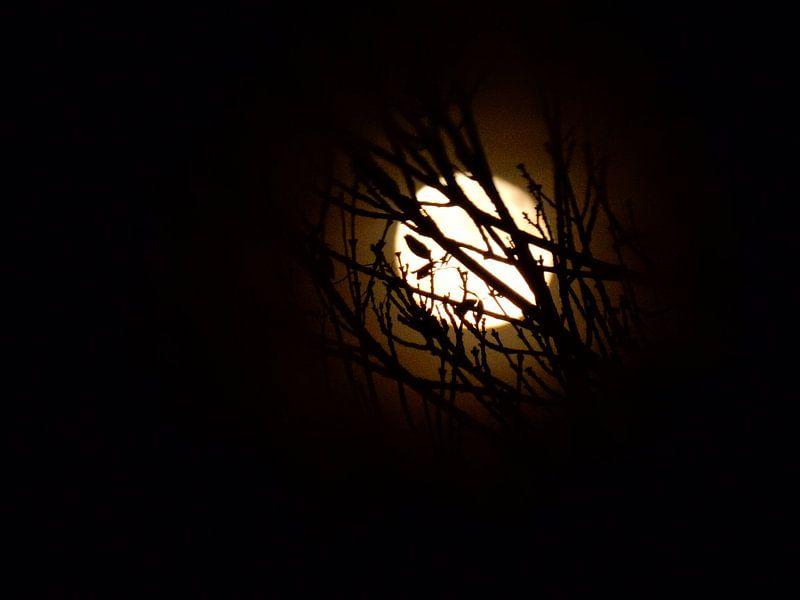 The moon van Michel Zwart