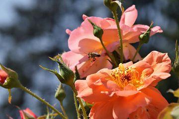 Pollenflug im Rosengarten von Christine Nöhmeier