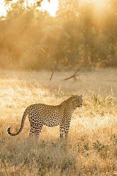 Luipaard in Zuid-Afrika van Frank Sengers