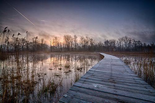 zonsopkomst bij Beekbergerwoud