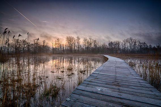 zonsopkomst bij Beekbergerwoud van Marjolein Hermans