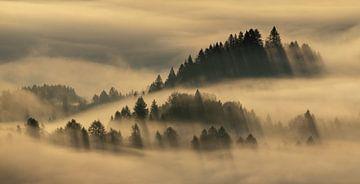 Mistige bomen van Wojciech Kruczynski