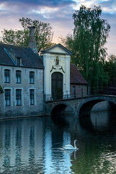Cygne de Bruges sur Joke De Craemer