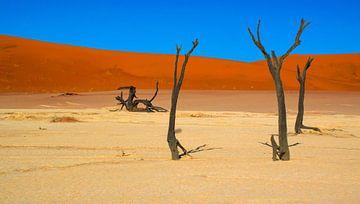 Kale, oude bomen in Deadvlei, Namibië van Rietje Bulthuis