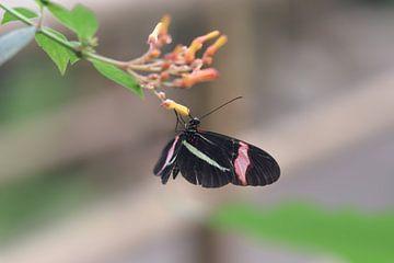 Bunter Schmetterling auf der Suche nach Nektar von Kim de Been
