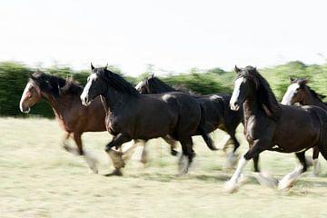 Rennende Paarden van Annet van Esch