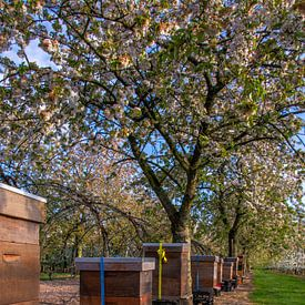 Bijenkasten in de boomgaard van Robin Pics (verliefd op Utrecht)