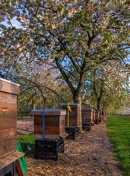 Bijenkasten in de boomgaard
