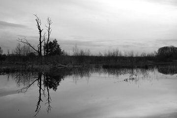 Reflexion im Wasser von Wytze Plantenga