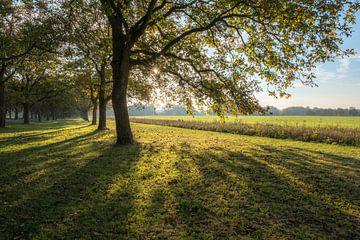 Prachtige notenbomen von Moetwil en van Dijk - Fotografie