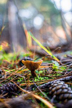 Pilz mit Tannenzapfen von Photoos.By.Tony
