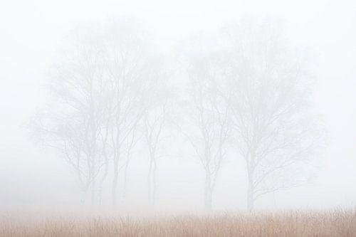 Klein berkengroep in de mist