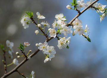 Time for blossom sur Birgitte Bergman