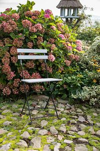 stoeltje buiten bij de hortensia