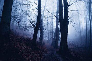 Mystischer Wald 016 von Oliver Henze