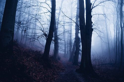Mystischer Wald 016 van Oliver Henze