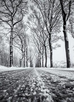 Sneeuw weg met bomen sur Martijn van Dellen