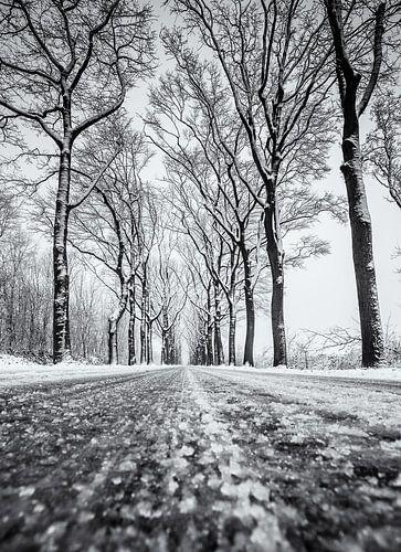Sneeuw weg met bomen van Martijn van Dellen