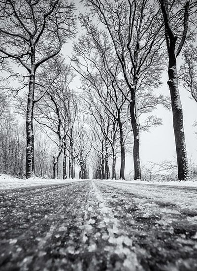 Sneeuw weg met bomen