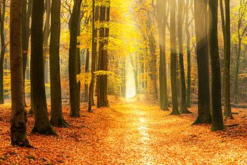 Sentier à travers une forêt dorée par une belle journée ensoleillée d'automne sur Sjoerd van der Wal