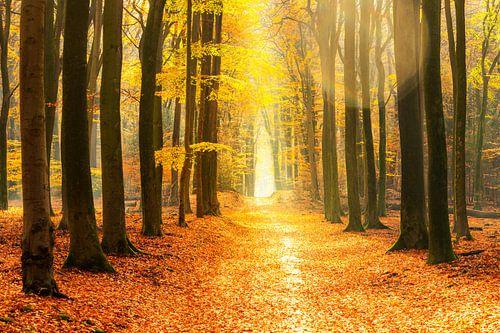 Pad door een goudkleurig bos tijdens een prachtige zonnige herfstdag