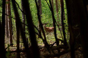 Hert in het bos, doorkijkje van Petra De Jonge